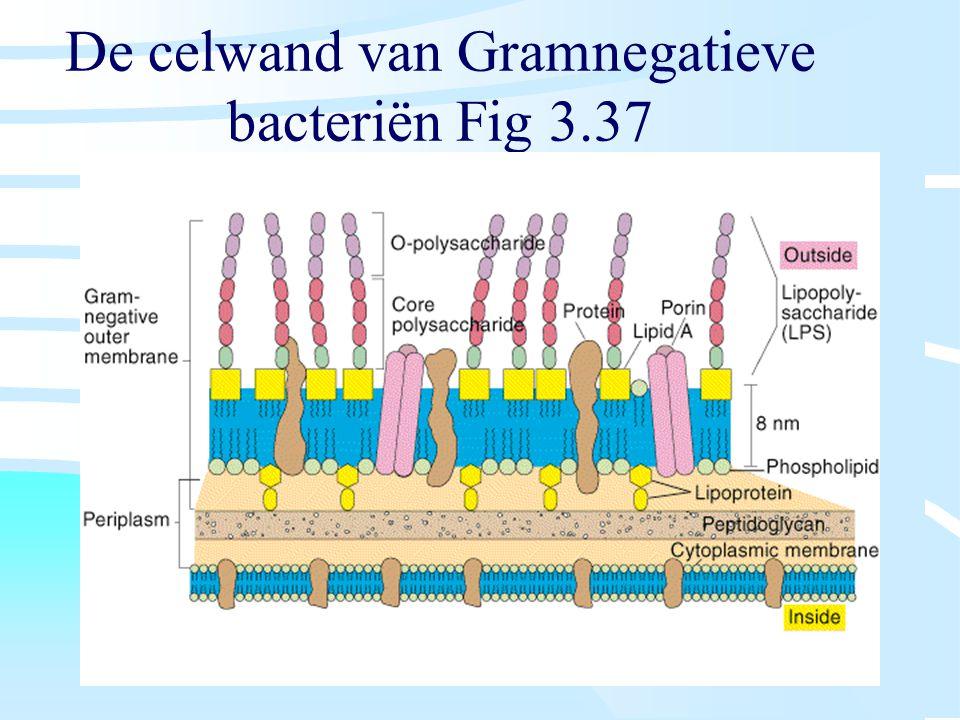 De celwand van Gramnegatieve bacteriën Fig 3.37