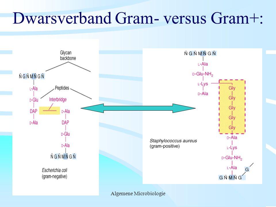 Dwarsverband Gram- versus Gram+: