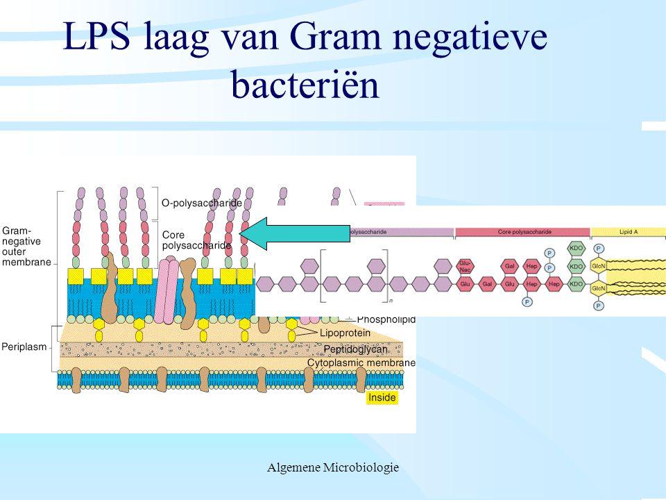LPS laag van Gram negatieve bacteriën