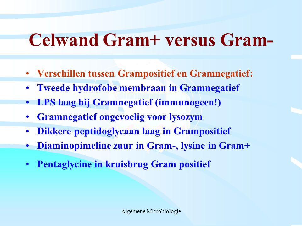 Celwand Gram+ versus Gram-