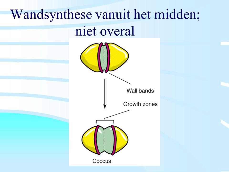 Wandsynthese vanuit het midden; niet overal