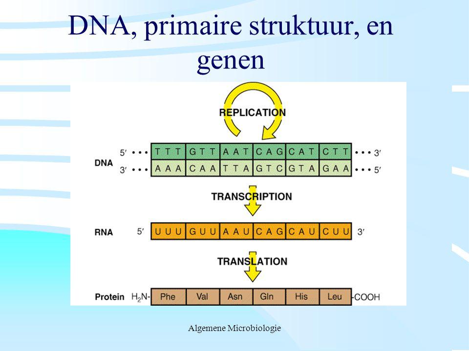 DNA, primaire struktuur, en genen