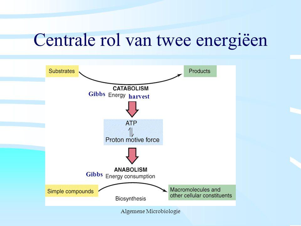 Centrale rol van twee energiëen
