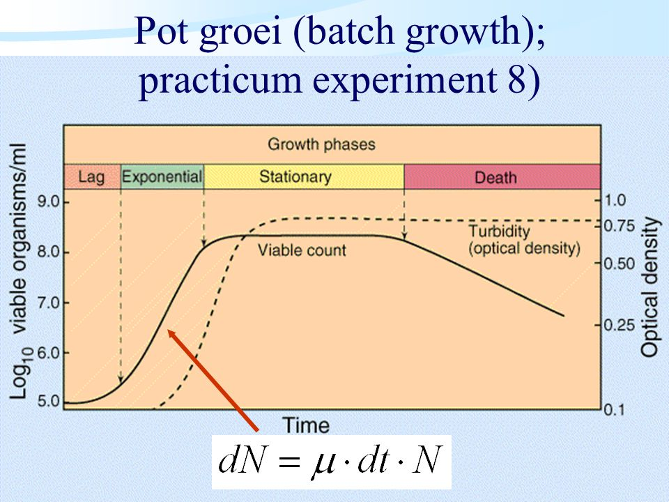 Pot groei (batch growth); practicum experiment 8)
