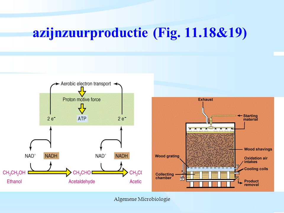 azijnzuurproductie (Fig. 11.18&19)