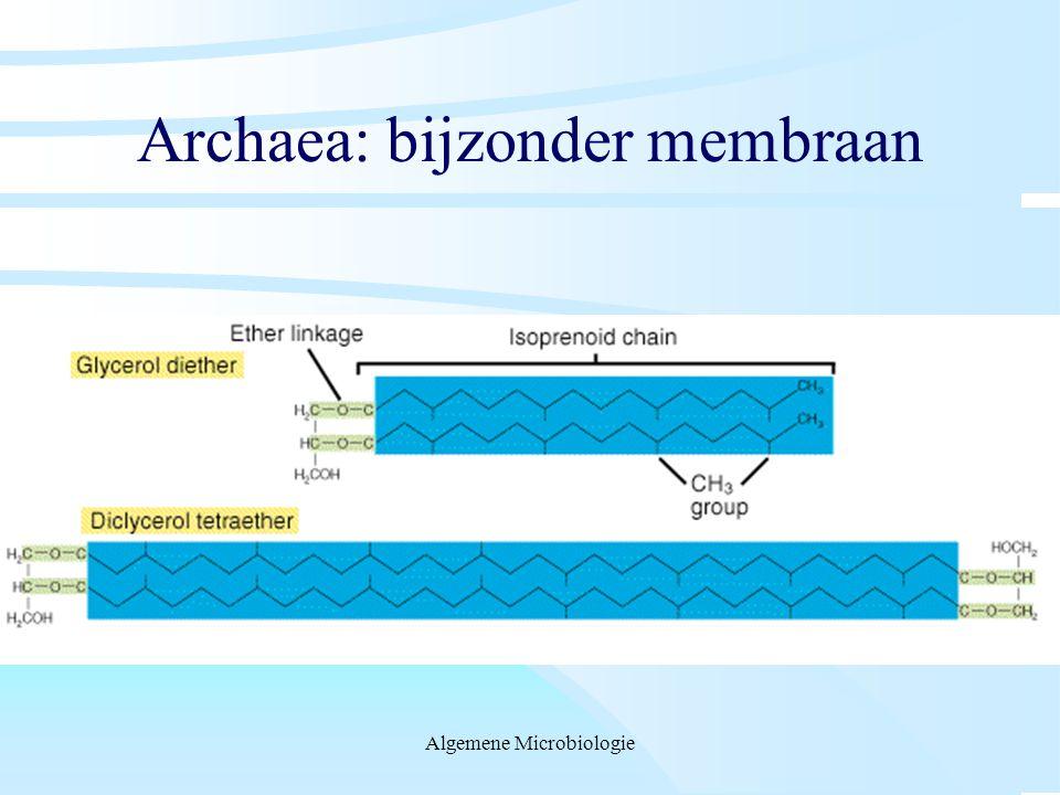 Archaea: bijzonder membraan