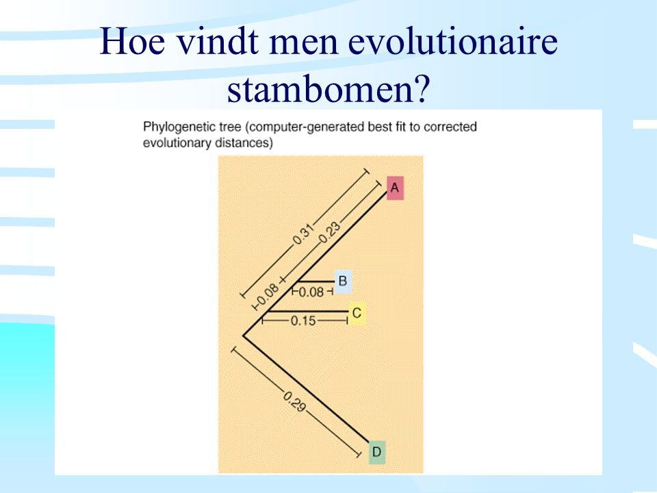 Hoe vindt men evolutionaire stambomen