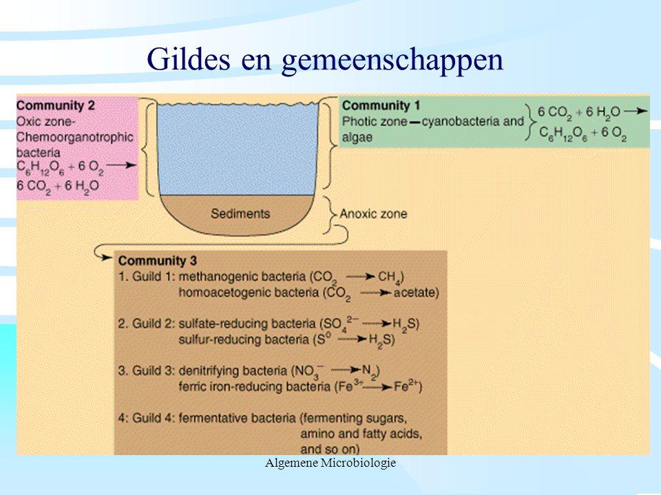 Gildes en gemeenschappen