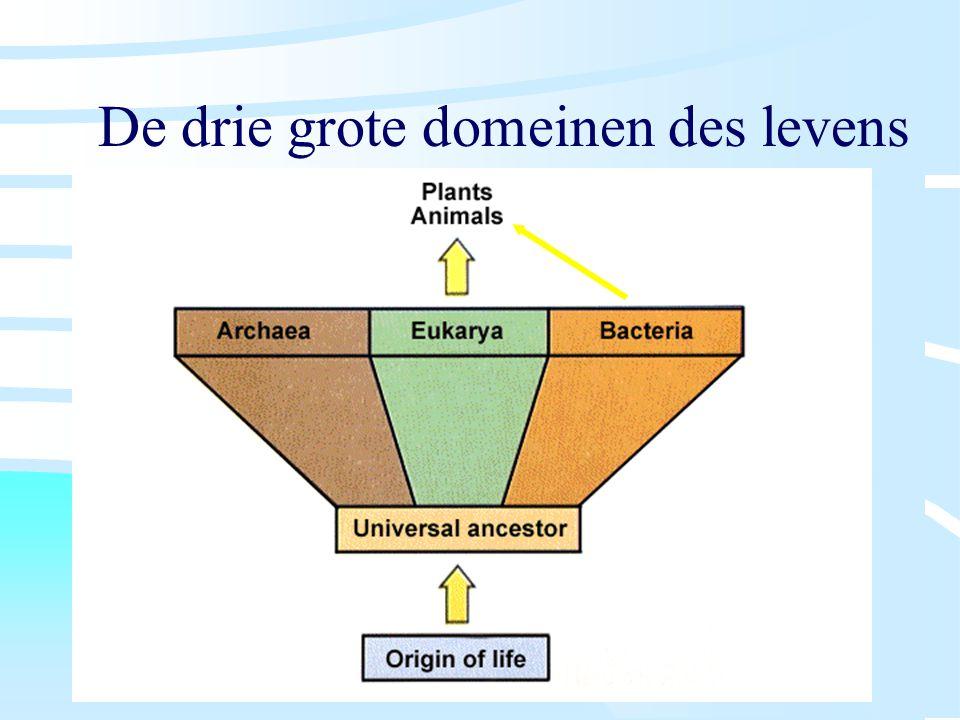 De drie grote domeinen des levens