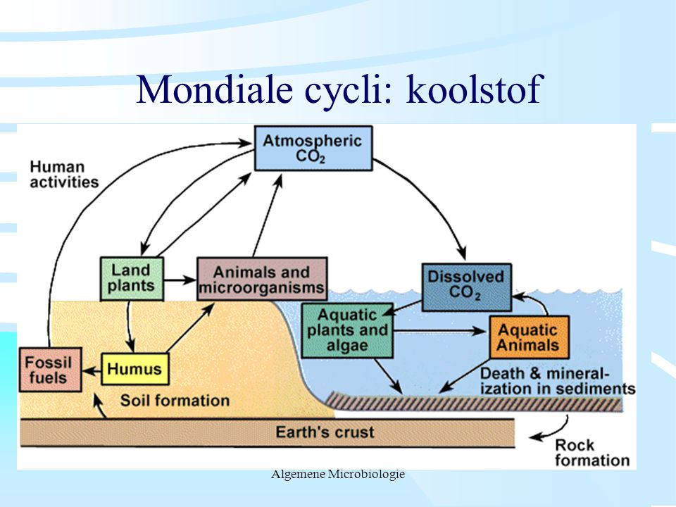 Mondiale cycli: koolstof