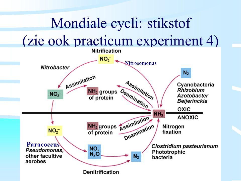 Mondiale cycli: stikstof (zie ook practicum experiment 4)