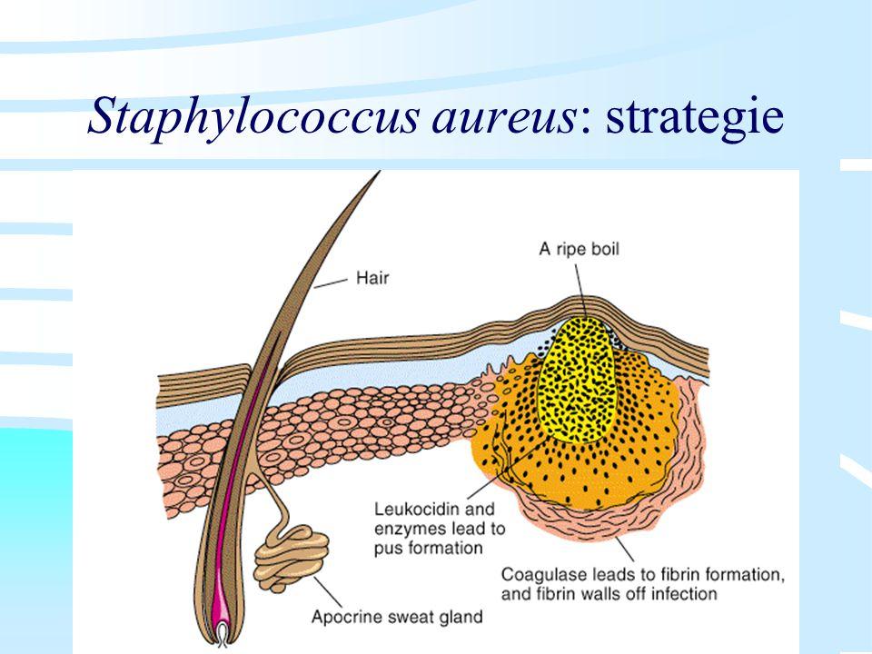 Staphylococcus aureus: strategie