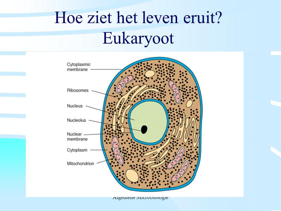 Hoe ziet het leven eruit Eukaryoot