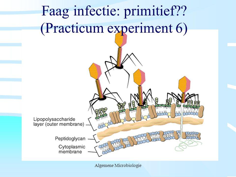 Faag infectie: primitief (Practicum experiment 6)
