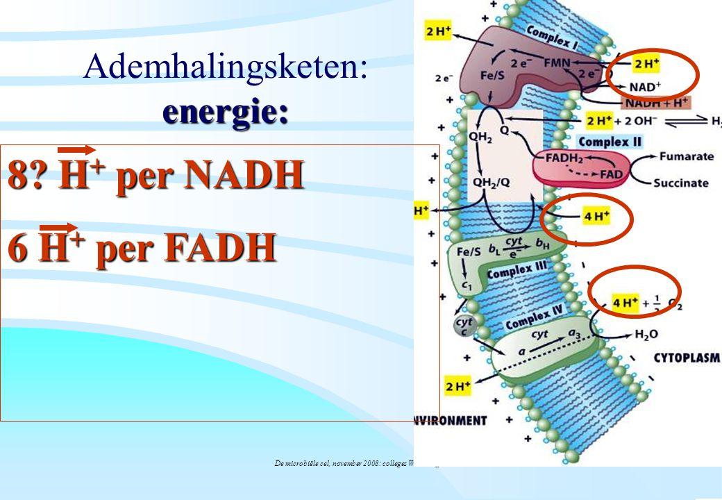 Ademhalingsketen: energie:
