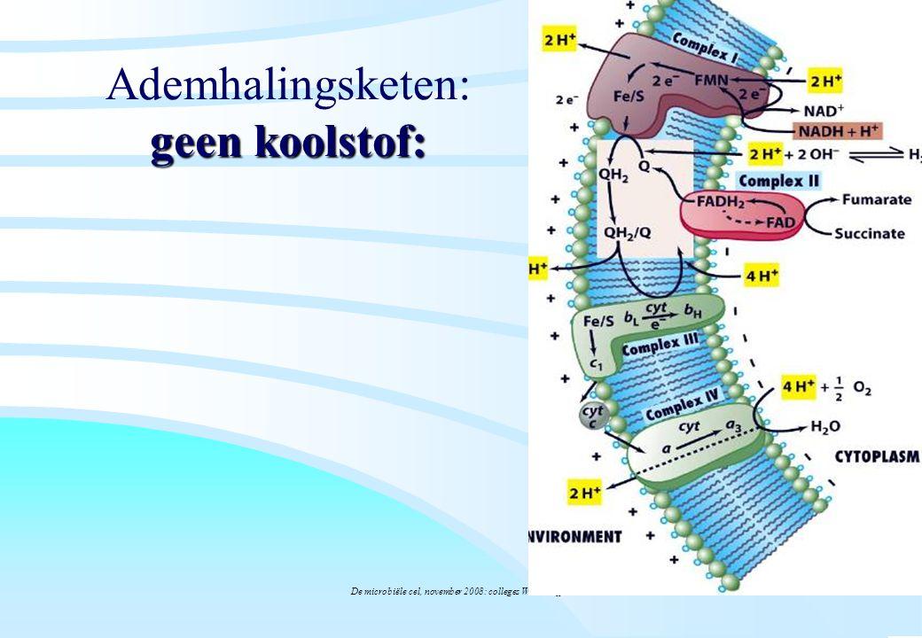 Ademhalingsketen: geen koolstof: