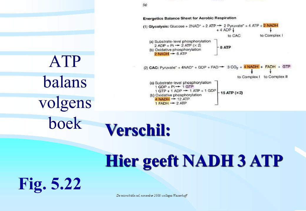 ATP balans volgens boek