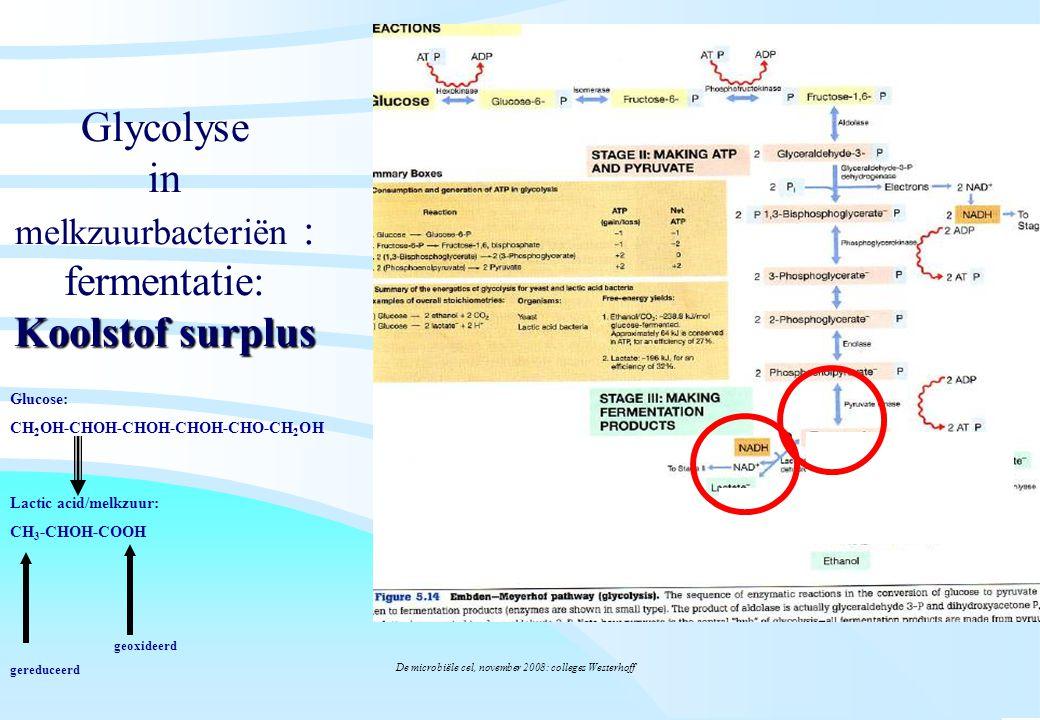 Glycolyse in melkzuurbacteriën : fermentatie: Koolstof surplus