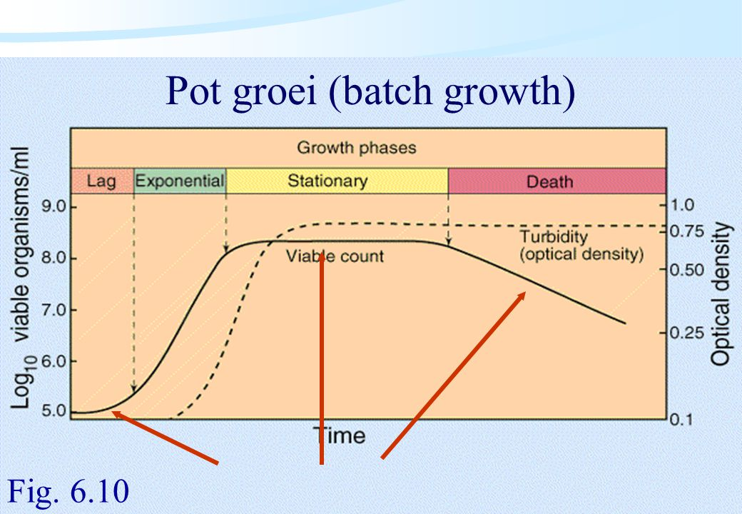 Pot groei (batch growth)