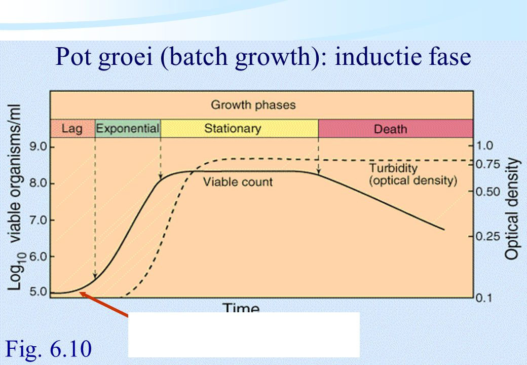 Pot groei (batch growth): inductie fase