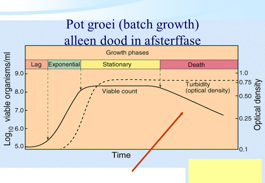 Pot groei (batch growth) alleen dood in afsterffase