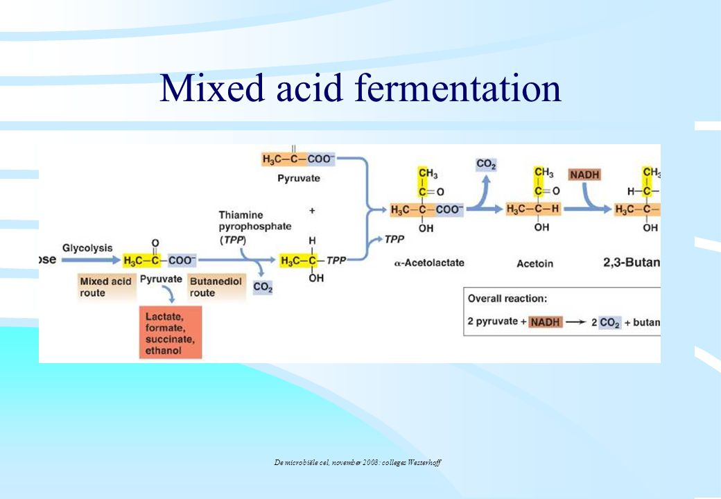 Mixed acid fermentation