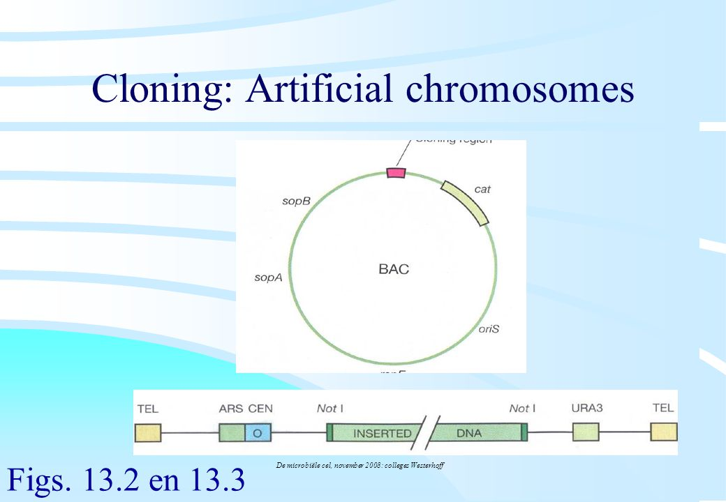 Cloning: Artificial chromosomes