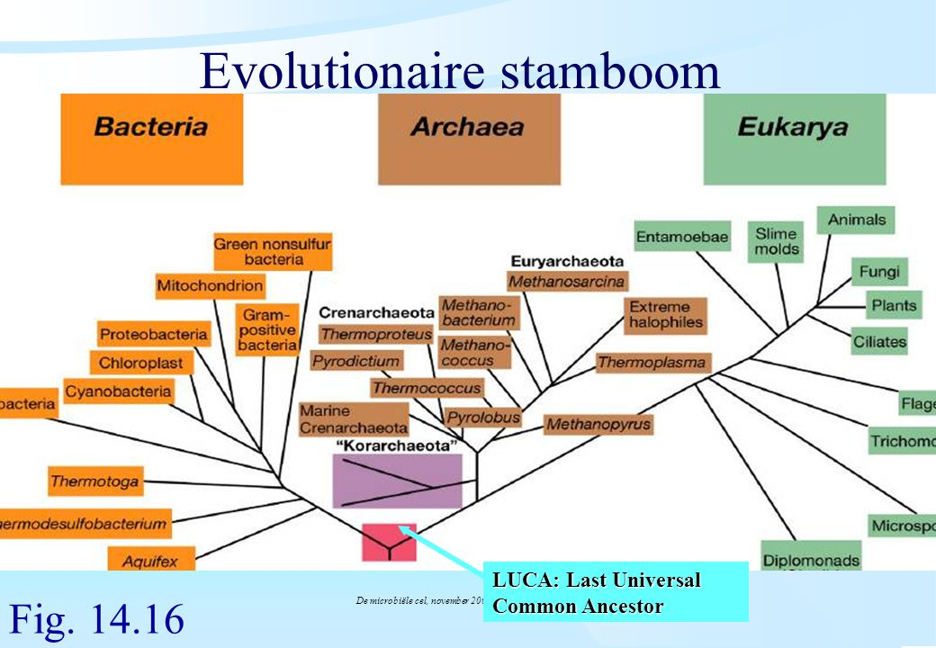 Evolutionaire stamboom