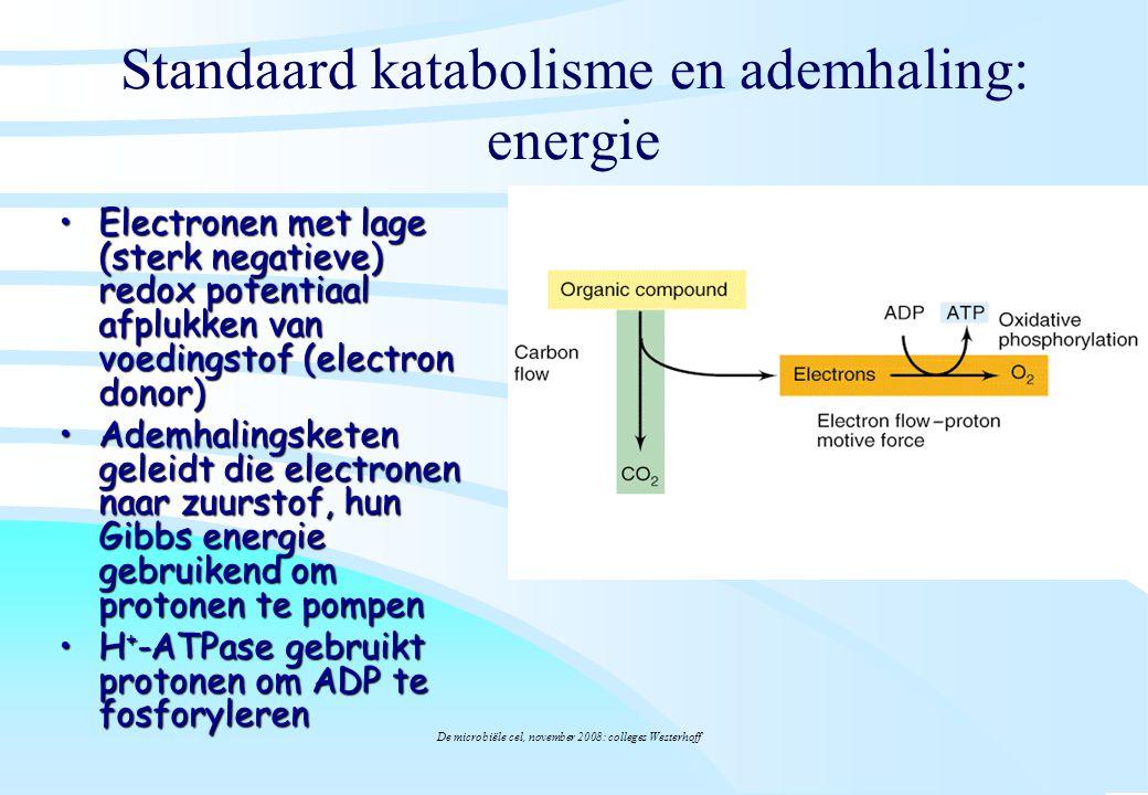 Standaard katabolisme en ademhaling: energie