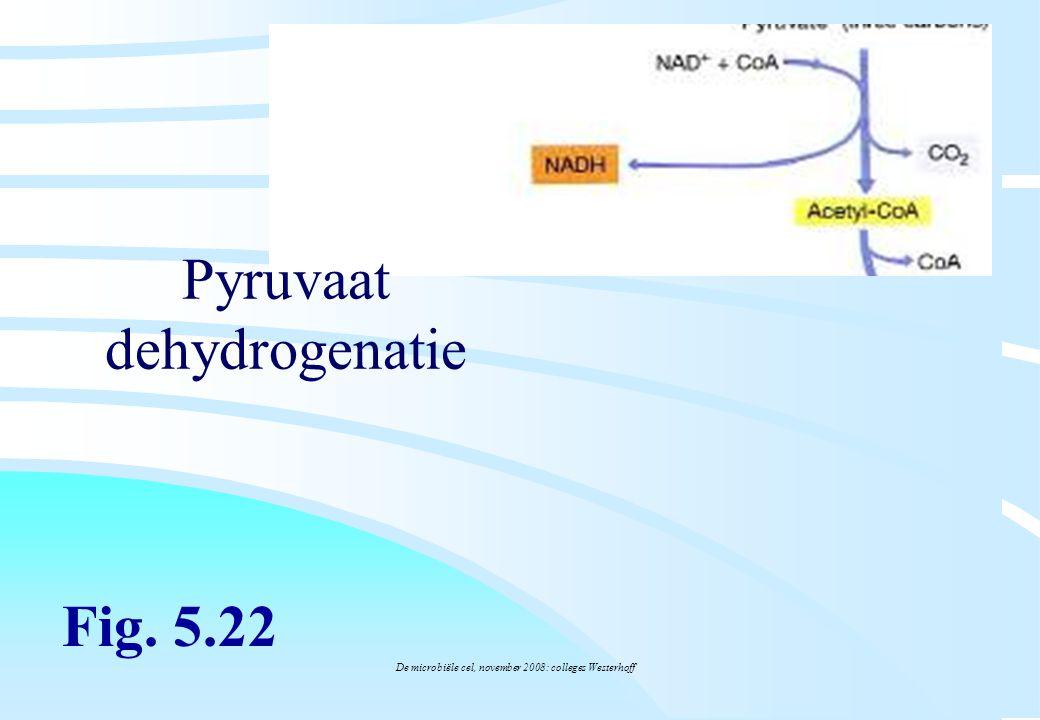 Pyruvaat dehydrogenatie