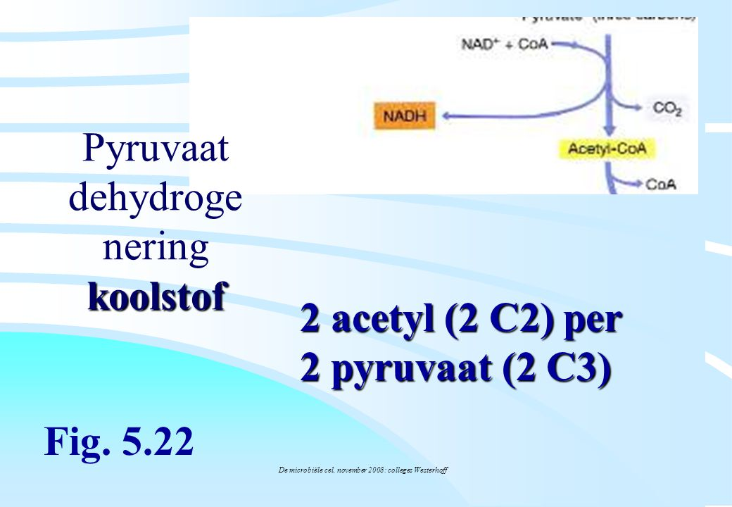 Pyruvaat dehydrogenering koolstof