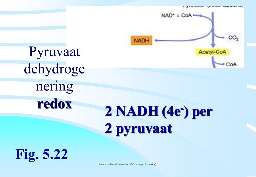 Pyruvaat dehydrogenering redox
