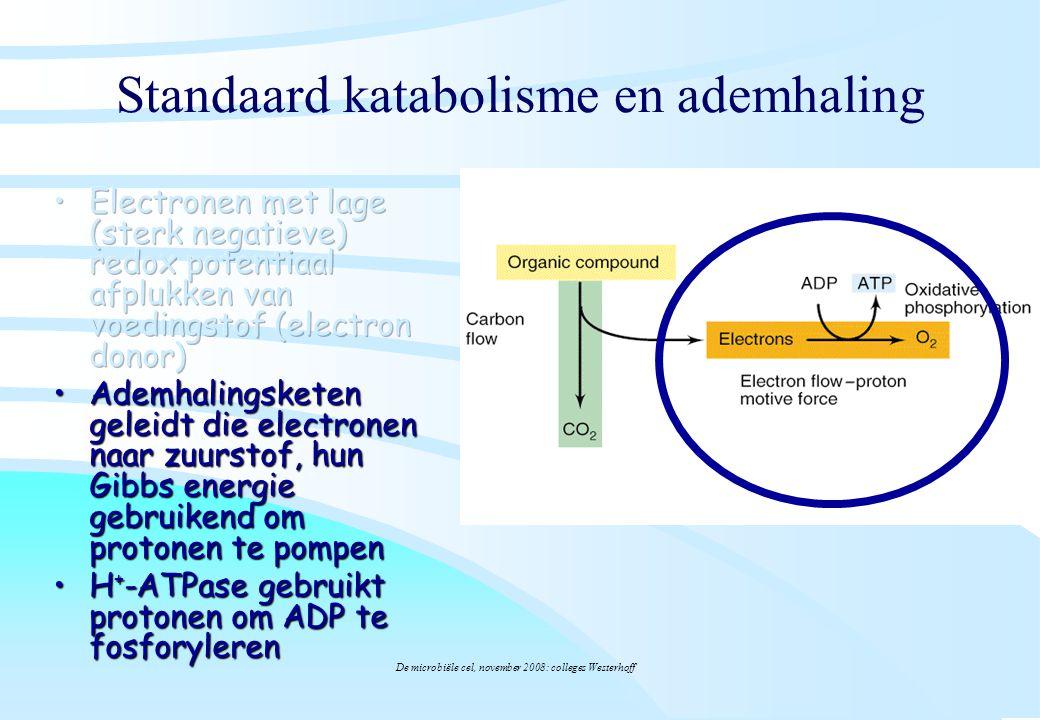 Standaard katabolisme en ademhaling