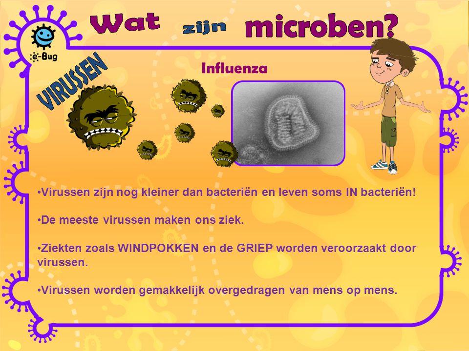 Influenza Wat microben zijn VIRUSSEN