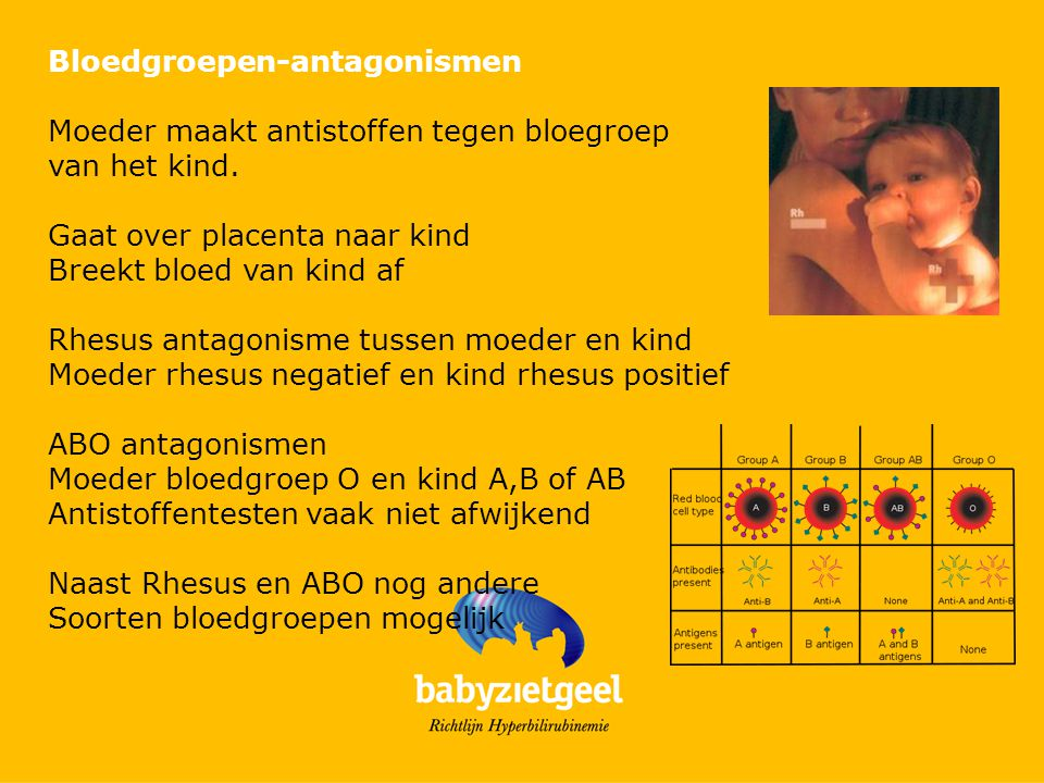 Bloedgroepen-antagonismen