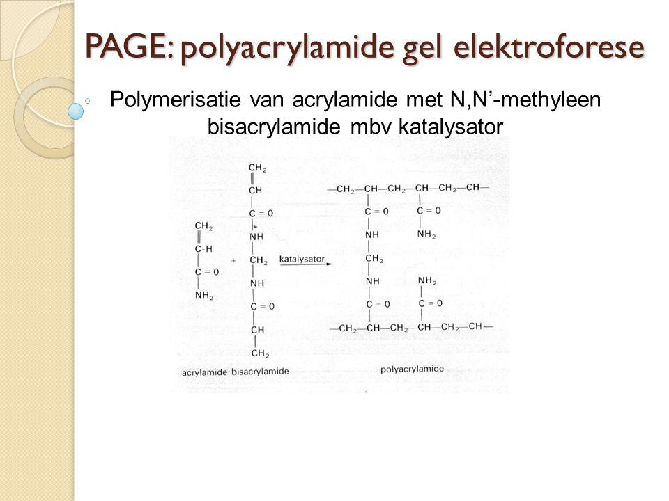 PAGE: polyacrylamide gel elektroforese