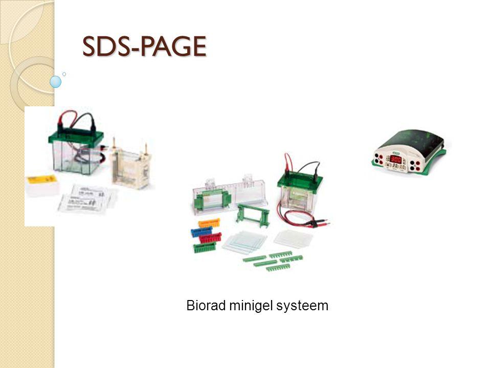 Biorad minigel systeem