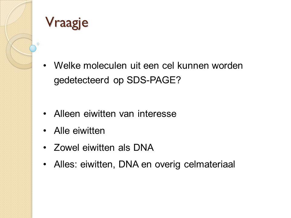 Vraagje Welke moleculen uit een cel kunnen worden gedetecteerd op SDS-PAGE Alleen eiwitten van interesse.