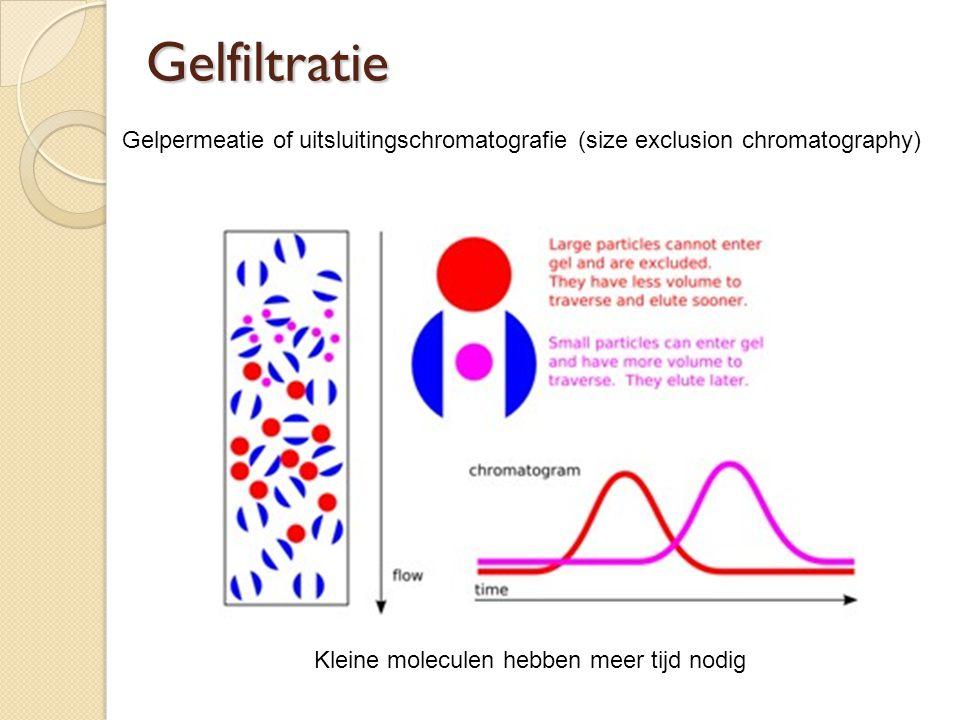 Gelfiltratie Gelpermeatie of uitsluitingschromatografie (size exclusion chromatography) Kleine moleculen hebben meer tijd nodig.