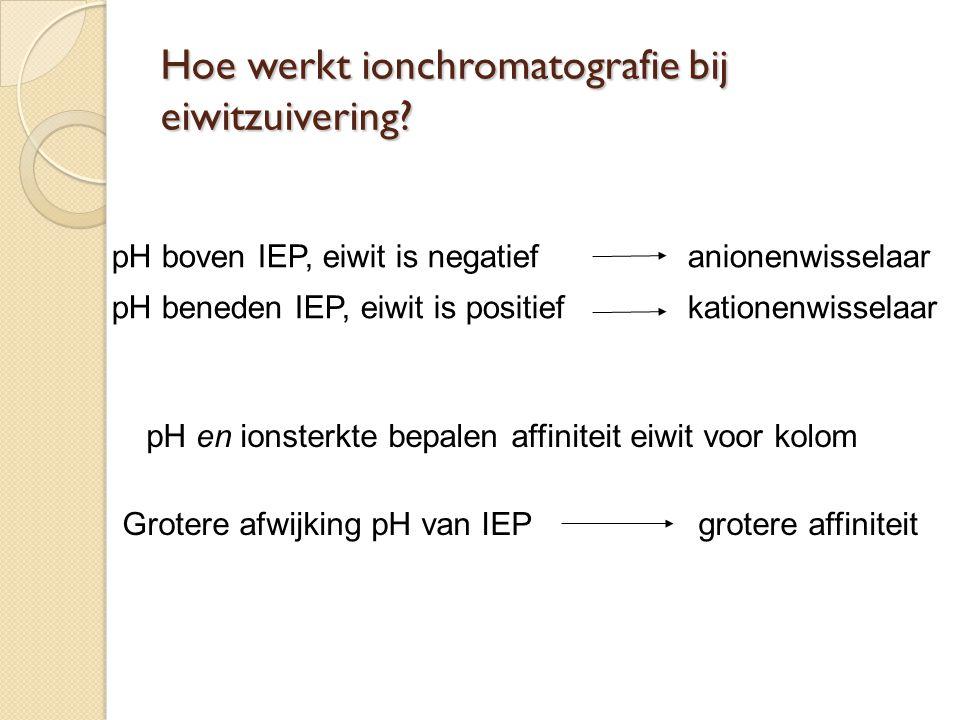 Hoe werkt ionchromatografie bij eiwitzuivering
