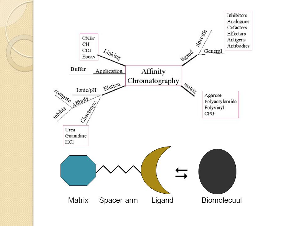  Matrix Spacer arm Ligand Biomolecuul