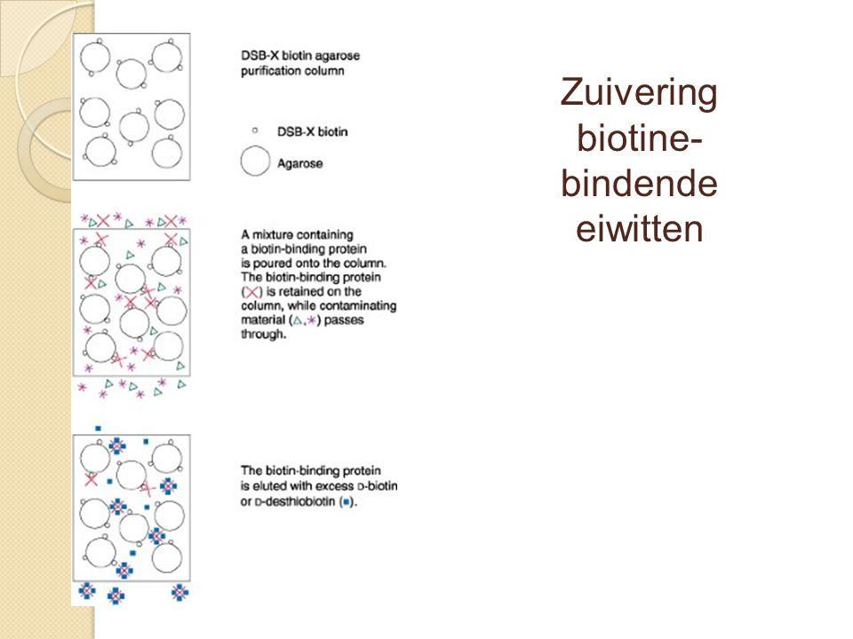 Zuivering biotine-bindende eiwitten