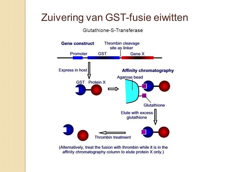 Zuivering van GST-fusie eiwitten