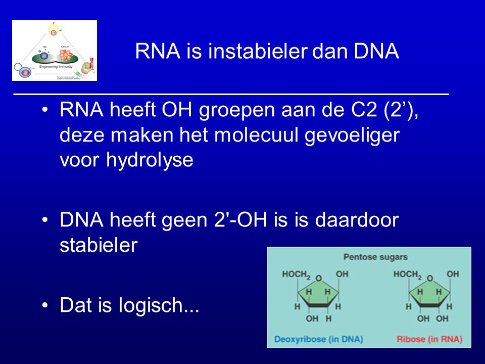 RNA is instabieler dan DNA