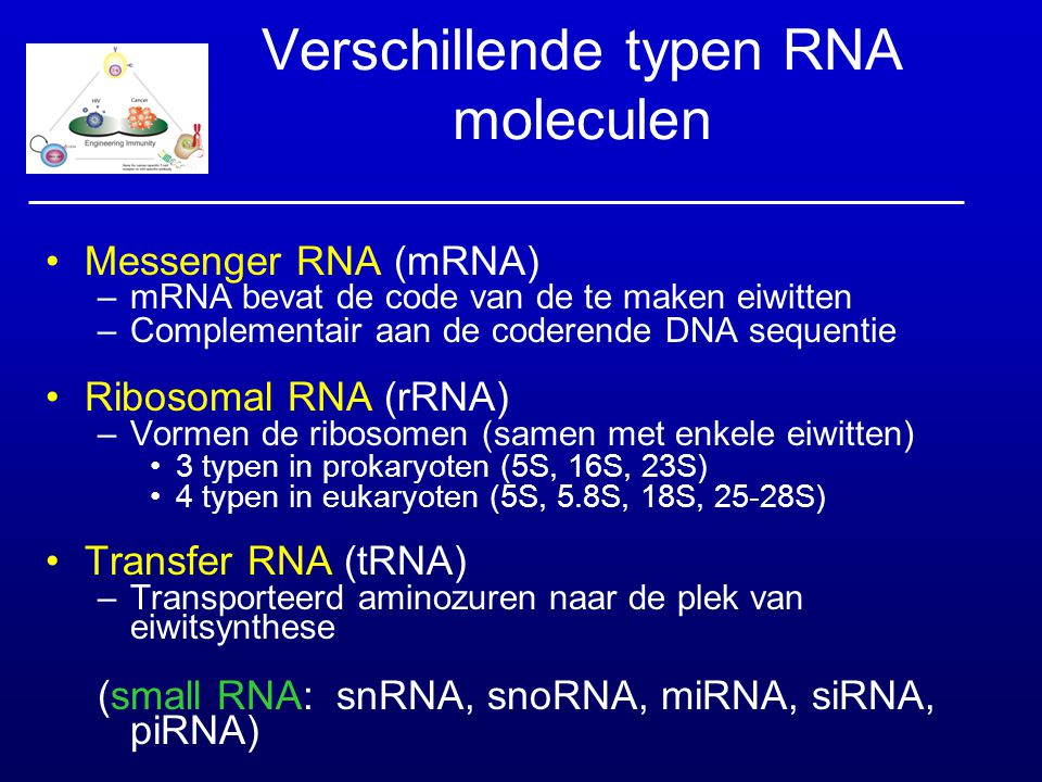 Verschillende typen RNA moleculen