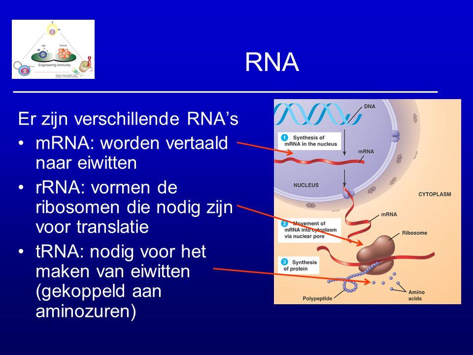 RNA Er zijn verschillende RNA's mRNA: worden vertaald naar eiwitten