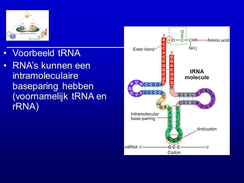 Voorbeeld tRNA RNA's kunnen een intramoleculaire baseparing hebben (voornamelijk tRNA en rRNA)