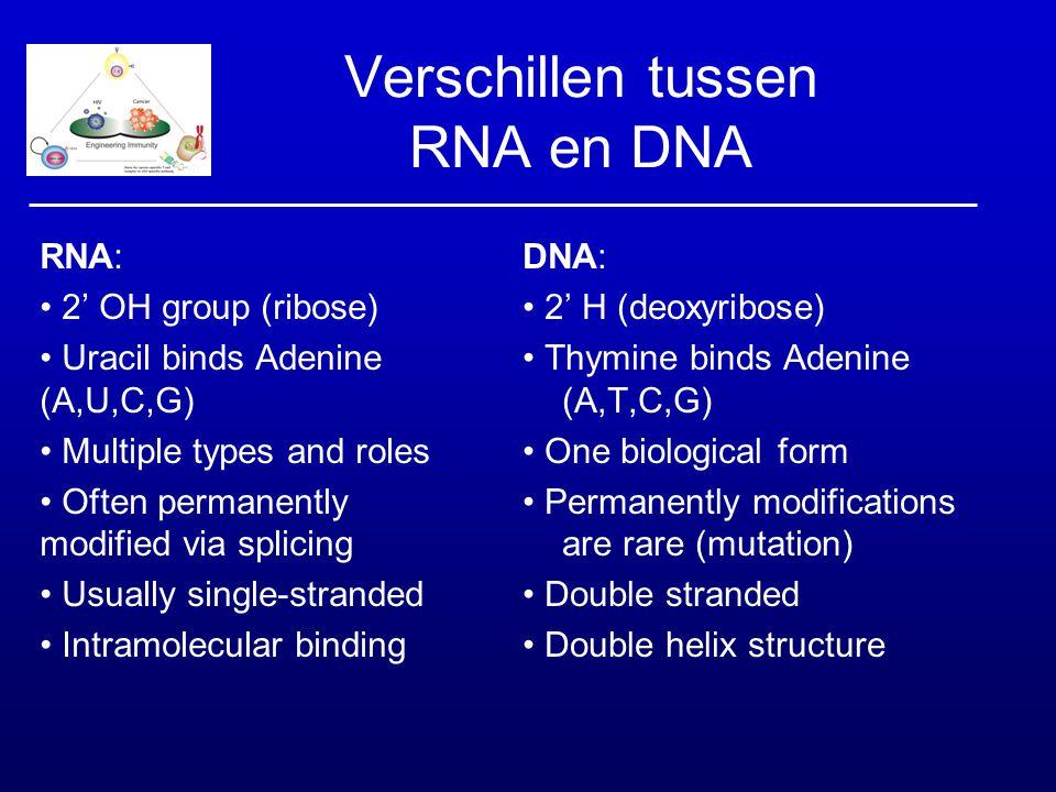 Verschillen tussen RNA en DNA