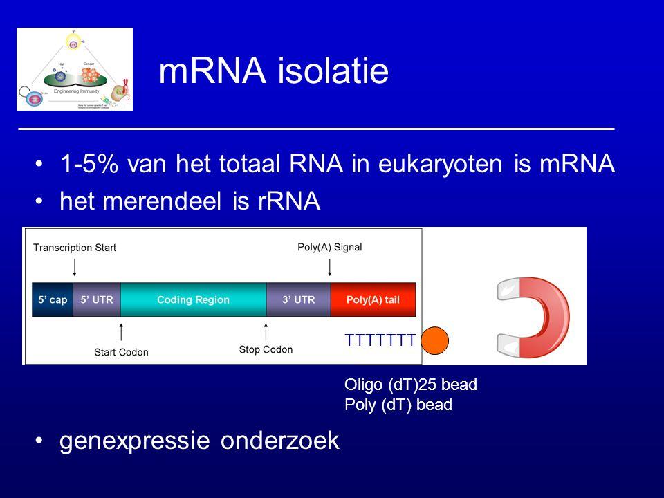 mRNA isolatie 1-5% van het totaal RNA in eukaryoten is mRNA