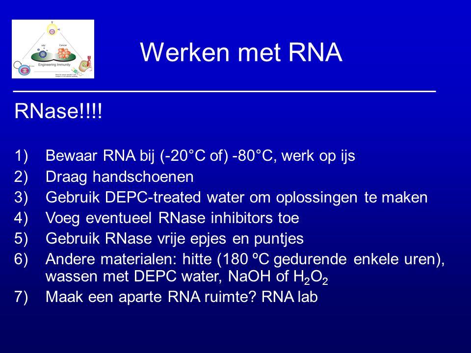 Werken met RNA RNase!!!! Bewaar RNA bij (-20°C of) -80°C, werk op ijs